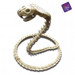 Cobra Esqueleto 50x43x13 cm.